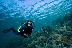 Female diver over coral reef Royalty Free Stock Image