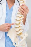 Female doctor with anatomical spine Royalty Free Stock Images