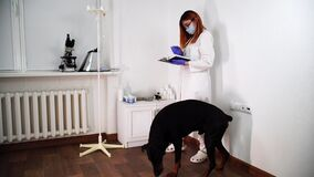 Female doctor checks black dog`s teeth and makes notes in her notebook