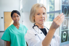 Female doctor looking at xrays Stock Image