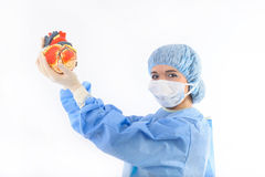 Female doctor or nurse holding a heart Stock Photo
