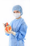 Female doctor or nurse holding a heart Stock Images