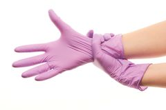 Female doctor's hands putting on purple sterilized surgical gloves Royalty Free Stock Photos