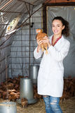 Female doctor in white coat holding chicken Royalty Free Stock Photo