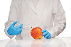 Female doctor in white medical gown and blue sterilized surgical gloves makes injection to good looking apple with plastic syringe Royalty Free Stock Photos