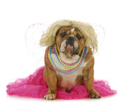 Female dog Royalty Free Stock Photos