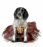 Female dog Royalty Free Stock Photography
