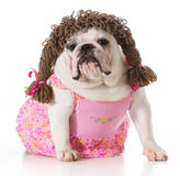 Female dog Royalty Free Stock Images
