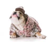 Female dog Stock Photography