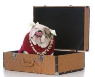 female dog inside suitcase Stock Photos