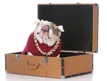 Female dog inside suitcase Royalty Free Stock Photos