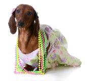 Female dog Royalty Free Stock Image