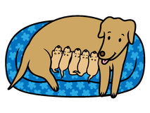 Female dog mother breast feeding new born puppies. Vector illustration of female dog breast feeding her new born puppies in bed at home Stock Photos
