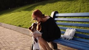Female dog owner, loving woman is caressing her spaniel dog while sitting on blue bench in green park. Cute litthle dog. Happiness and love concept stock footage