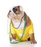 Female dog Royalty Free Stock Photos