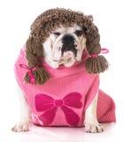 Female dog winking Royalty Free Stock Images