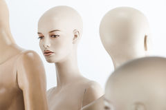 Female dolls portrait. Female window dolls in a group Royalty Free Stock Photos