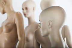 Female dolls. Female window dolls in a group Stock Image