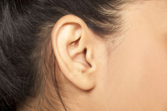 Female ear. Close up of female ear stock photography