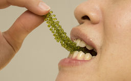 Female eating healthy green seaweed snack Stock Photos