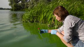 Female ecologist takes samples of river water infected with green algae in tube. Side view of female ecologist takes samples of river water infected with green stock video