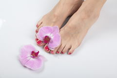 Female elegance feet red pedicure nails spa therapy. Female feet red pedicure nails Stock Photo