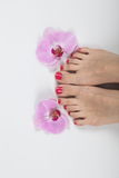 Female elegance feet red pedicure nails spa therapy. Female feet red pedicure nails Royalty Free Stock Photography