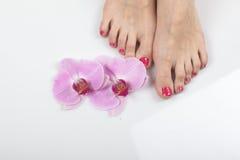 Female elegance feet red pedicure nails spa therapy. Female feet red pedicure nails Stock Images