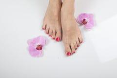 Female elegance feet red pedicure nails spa therapy. Female feet red pedicure nails Stock Photos