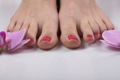 Female elegance feet red pedicure nails spa therapy. Female feet red pedicure nails Royalty Free Stock Photos