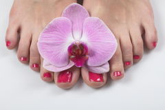 Female elegance feet red pedicure nails spa therapy. Female feet red pedicure nails Royalty Free Stock Photo