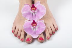 Female elegance feet red pedicure nails spa therapy. Female feet red pedicure nails Stock Image