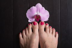 Female elegance feet red pedicure nails spa therapy. Female feet red pedicure nails Royalty Free Stock Images