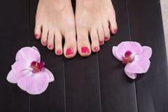 Female elegance feet red pedicure nails spa therapy. Female feet red pedicure nails Royalty Free Stock Image