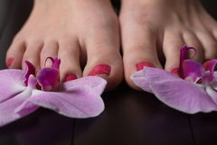Female elegance feet red pedicure nails spa therapy. Female feet red pedicure nails