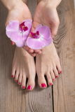 Female elegance feet red pedicure nails spa therapy Royalty Free Stock Image