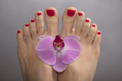 Female elegance feet red pedicure nails spa therapy Royalty Free Stock Photo