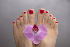 Female elegance feet red pedicure nails spa therapy Royalty Free Stock Images