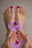 Female elegance feet red pedicure nails spa therapy Stock Image