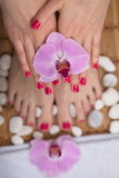 Female elegance feet red pedicure nails spa therapy Stock Photography