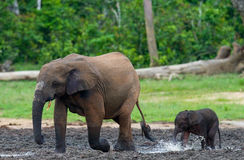 Female elephant with a baby. royalty free stock photography