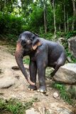 Female elephant sits on boulder scratches itself Royalty Free Stock Photos