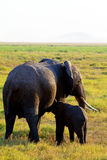 Female elephant with young drinking Stock Photo