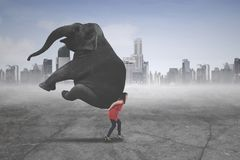Female entrepreneur carrying an elephant royalty free stock images