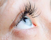 Female eye Royalty Free Stock Photos
