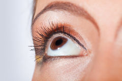 female eye Stock Images