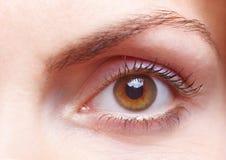 Female eye. Close-up of a female human eye with eyebrow stock image