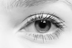 Female eye. At a short distance Stock Photos