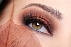 Female eye with a brown make-up stock image