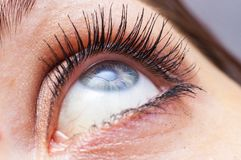 Female eye close up Stock Images